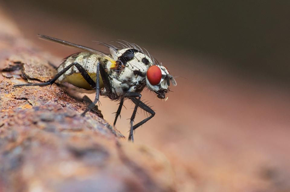 Se débarrasser mouches